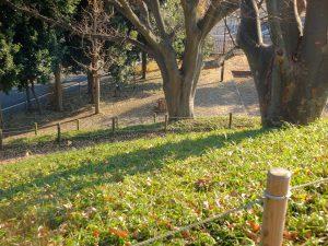野毛大塚古墳の頂上部(別角度から)