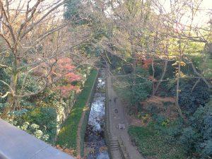 等々力渓谷 橋の上からの撮影