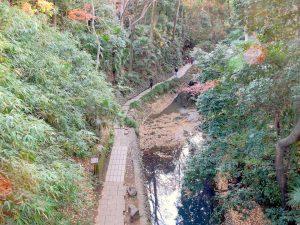 等々力渓谷 ゴルフ橋からの撮影
